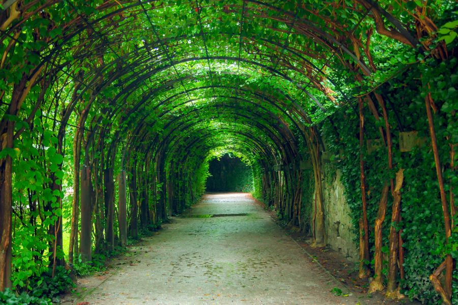 Tunnel aus Blätter im Mirabellgarten