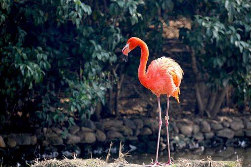 Flamingo Zoo Salzburg Familienurlaub