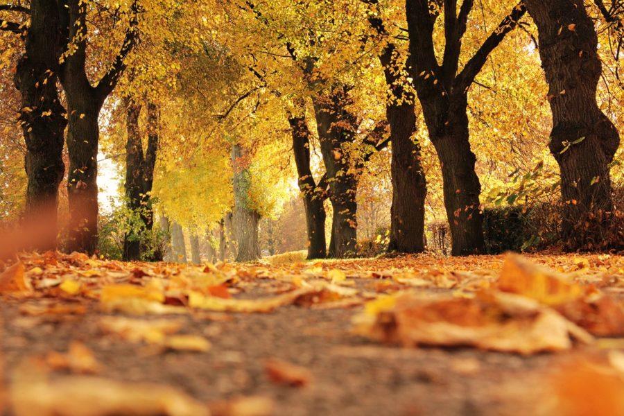Salzburg Spaziergänge im Herbst
