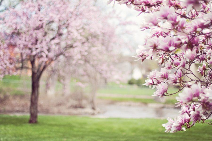 Magnolienbäume im Park